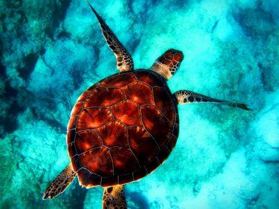 Wspólnie świętujmy Światowy Dzień Oceanów!